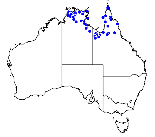 distribution map showing range of Acrochordus arafurae in Australia