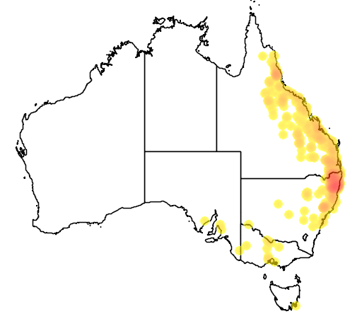 distribution map showing range of Aepyprymnus rufescens in Australia