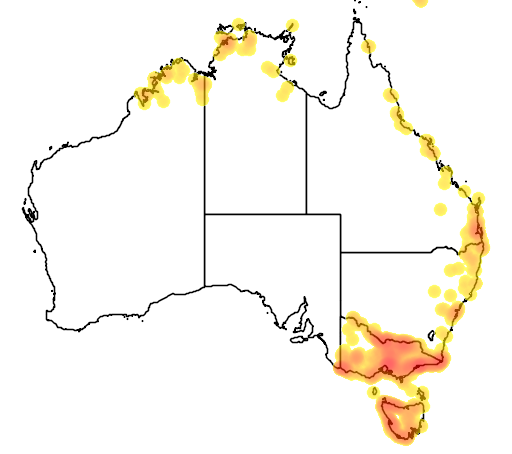 distribution map showing range of Alcedo azurea in Australia