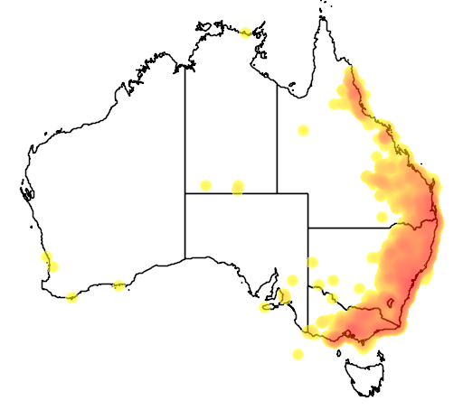 distribution map showing range of Alisterus scapularis in Australia