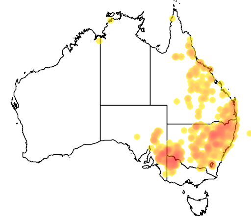 distribution map showing range of Amphibolurus nobbi in Australia