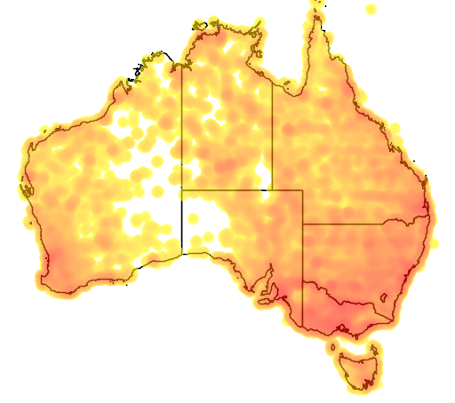 distribution map showing range of Anas gracilis in Australia