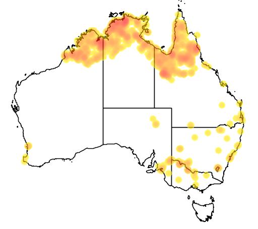 distribution map showing range of Anhinga melanogaster in Australia