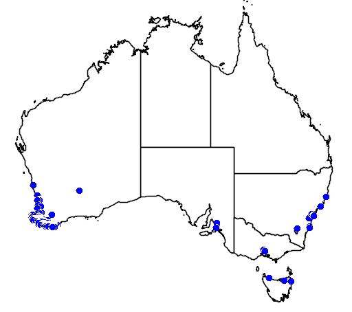 distribution map showing range of Anigozanthos flavidus in Australia
