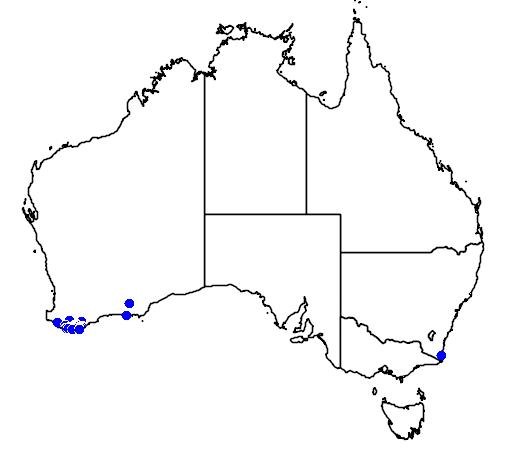 distribution map showing range of Anigozanthos preissii in Australia