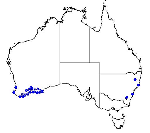 distribution map showing range of Anigozanthos rufus in Australia