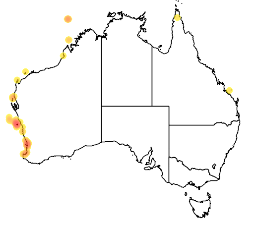 distribution map showing range of Anous tenuirostris in Australia