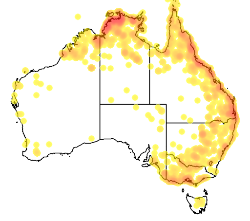 distribution map showing range of Anseranas semipalmata in Australia