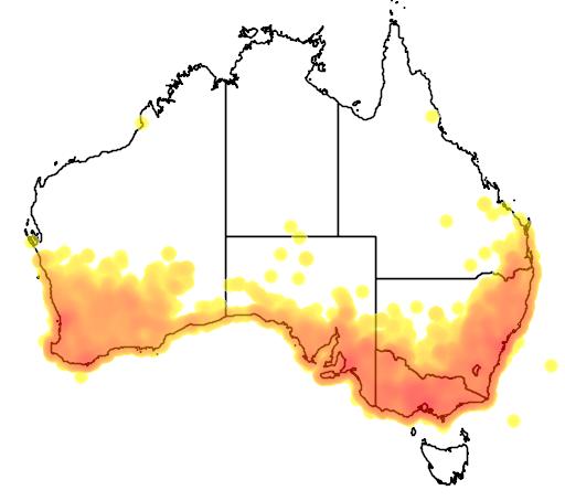 distribution map showing range of Anthochaera carunculata in Australia
