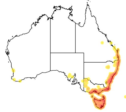 distribution map showing range of Aotus ericoides in Australia