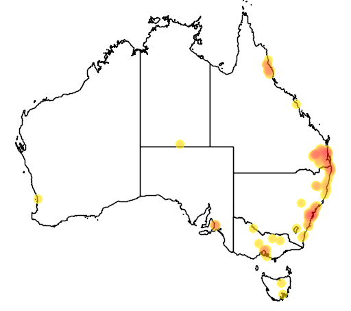 distribution map showing range of Araucaria bidwillii in Australia