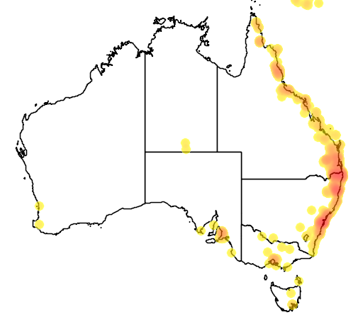 distribution map showing range of Araucaria cunninghamia in Australia