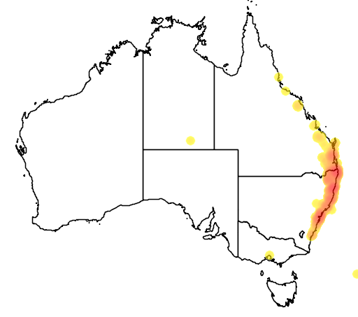 distribution map showing range of Archontophoenix cunninghamiana in Australia