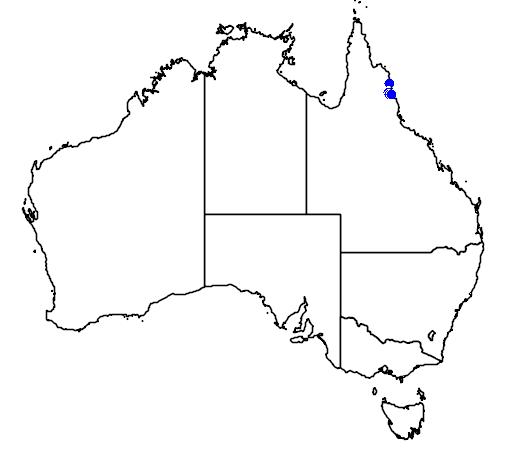 distribution map showing range of Archontophoenix purpurea in Australia