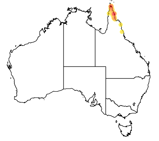 distribution map showing range of Arses lorealis in Australia