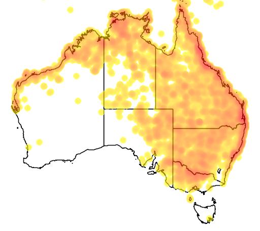 distribution map showing range of Artamus leucorynchus in Australia