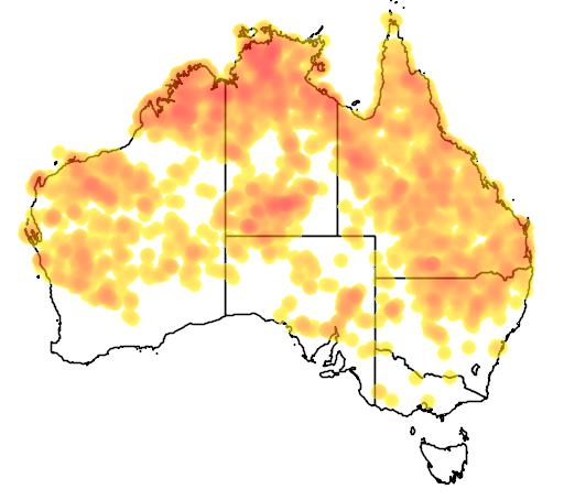 distribution map showing range of Artamus minor in Australia