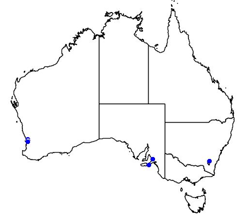 distribution map showing range of Astroloma foliosum in Australia