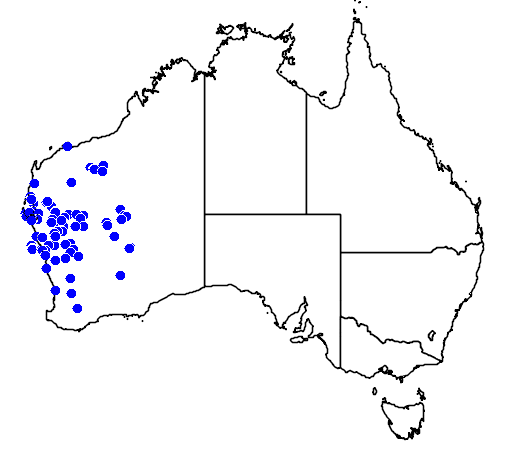 distribution map showing range of Atriplex amnicola in Australia