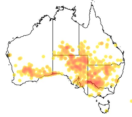 distribution map showing range of Atriplex nummularia in Australia