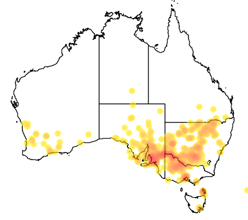 distribution map showing range of Atriplex suberecta in Australia