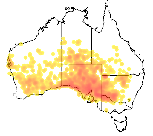 distribution map showing range of Atriplex vesicaria in Australia