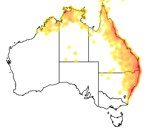distribution map showing range of Aviceda subcristata in Australia