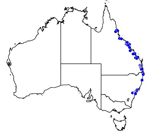 distribution map showing range of Backhousia citriodora in Australia