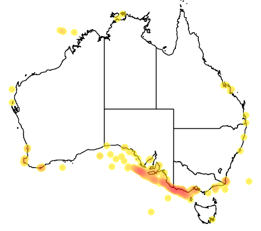 distribution map showing range of Balaenoptera musculus in Australia