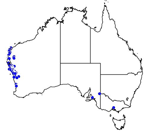 distribution map showing range of Banksia ashbyi in Australia