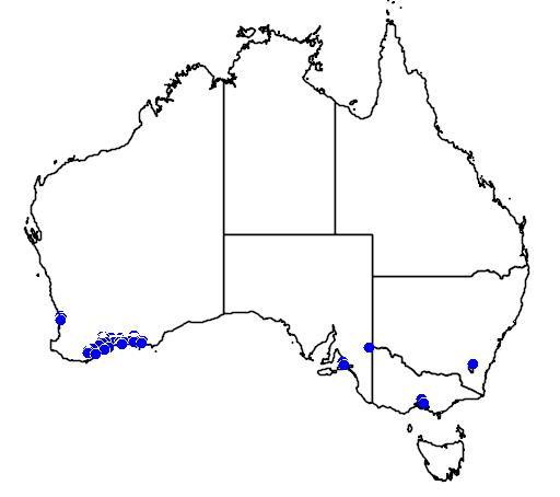 distribution map showing range of Banksia blechnifolia in Australia
