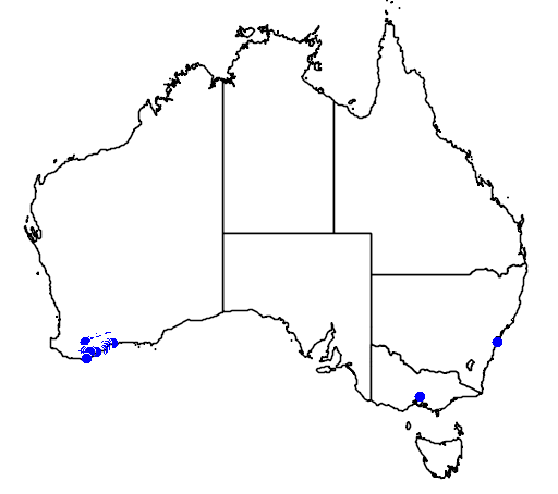 distribution map showing range of Banksia caleyi in Australia