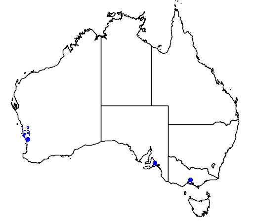 distribution map showing range of Banksia candolleana in Australia