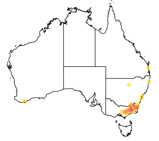 distribution map showing range of Banksia canei in Australia