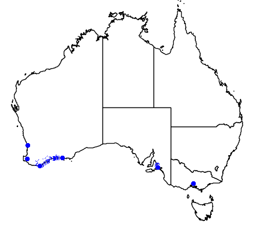 distribution map showing range of Banksia coccinea in Australia