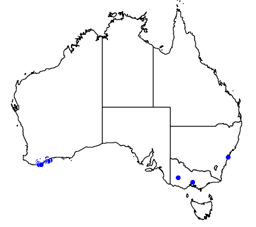 distribution map showing range of Banksia dryandroides in Australia