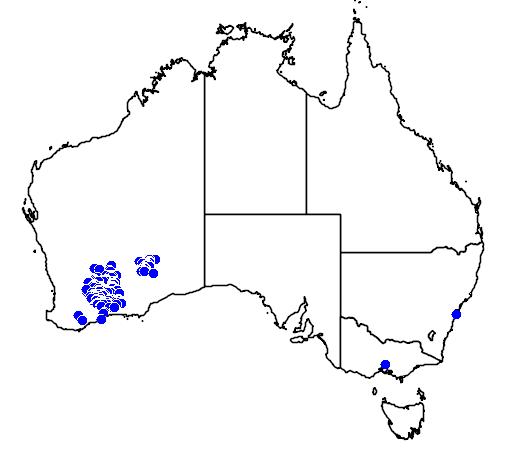 distribution map showing range of Banksia elderiana in Australia