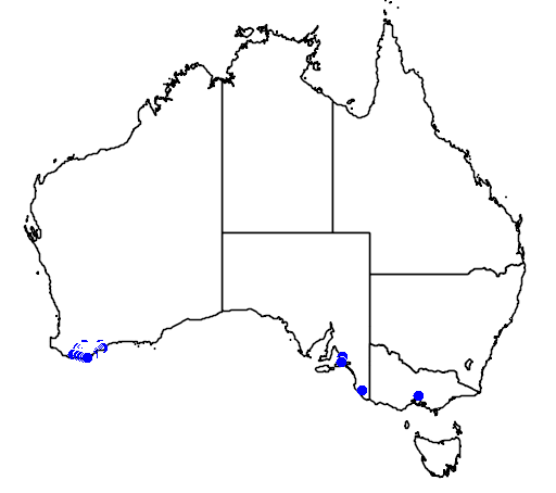 distribution map showing range of Banksia gardneri in Australia