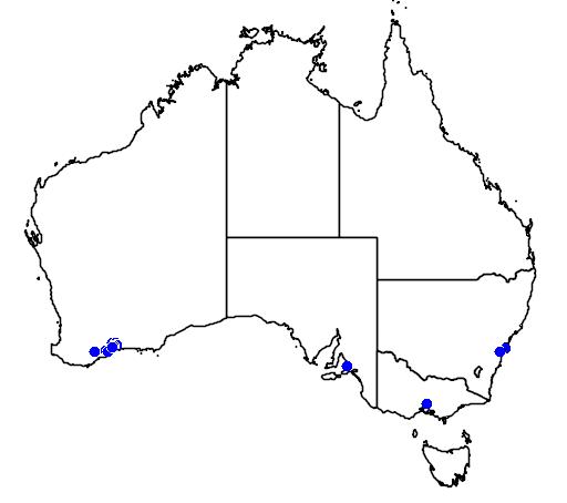distribution map showing range of Banksia laevigata in Australia