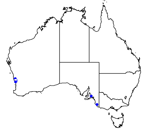 distribution map showing range of Banksia laricina in Australia