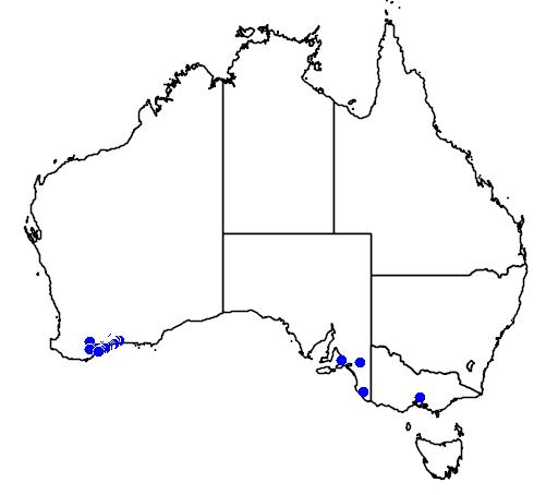 distribution map showing range of Banksia lemanniana in Australia
