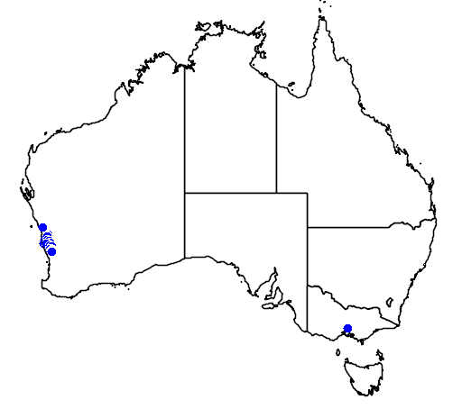 distribution map showing range of Banksia leptophylla in Australia