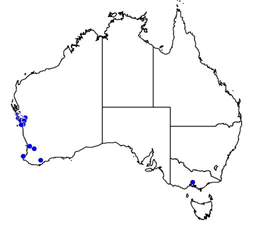 distribution map showing range of Banksia lindleyana in Australia