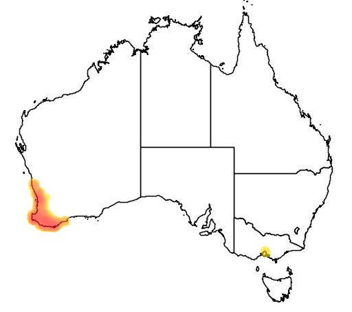 distribution map showing range of Banksia littoralis in Australia