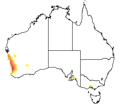 distribution map showing range of Banksia menziesii in Australia