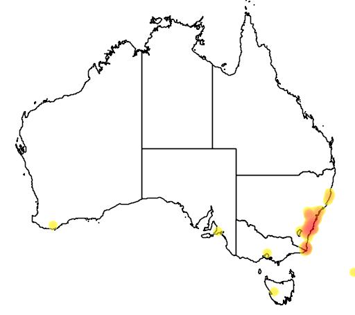 distribution map showing range of Banksia paludosa in Australia
