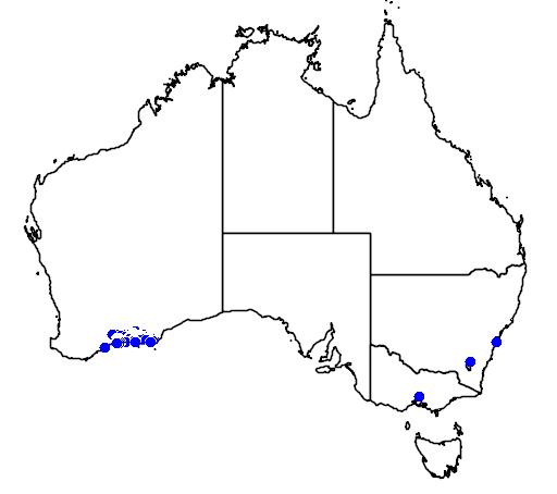 distribution map showing range of Banksia pilostylis in Australia