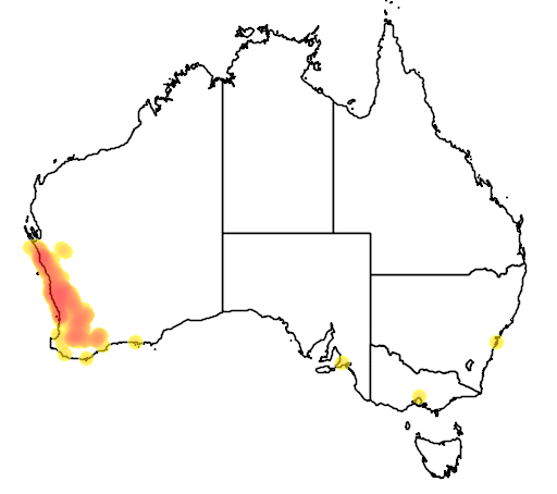 distribution map showing range of Banksia prionotes in Australia