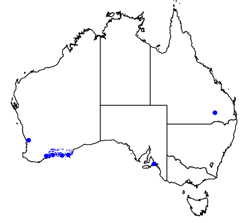 distribution map showing range of Banksia pulchella in Australia
