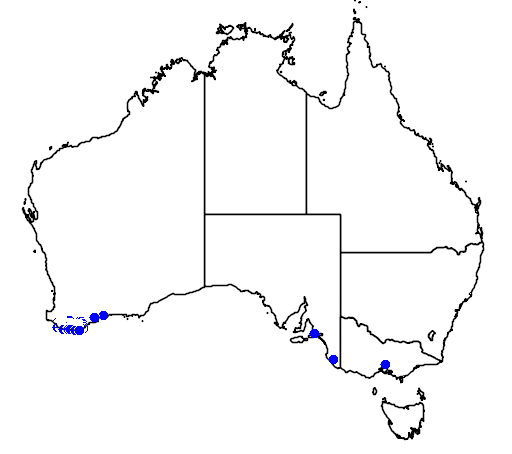 distribution map showing range of Banksia quercifolia in Australia